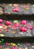 camélias Image libre de droits