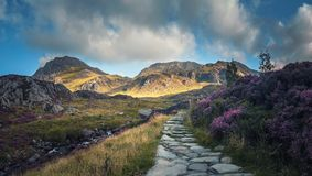 Cam Ideal Path with Blooming heather Flowers at Summer. Stone Foot Path in Scenic Snowodnia Mountains in North Wales UK royalty free stock photo