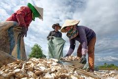 CAM RANH,越南- 2017年4月01日:三位农夫收获甜点 库存图片