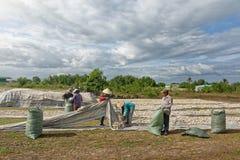 CAM RANH,越南- 2017年4月01日:小组农夫收获swee 库存照片