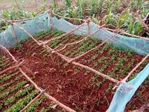 Cama africana do berçário dos pimentões da vila Foto de Stock Royalty Free