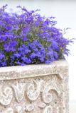 Cama-alfombra de flores azules Imágenes de archivo libres de regalías