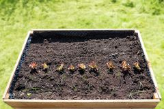 Cama aumentada da madeira para vegetais com solo e algum do adubo você foto de stock royalty free