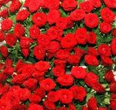Cama color de rosa roja Imagenes de archivo
