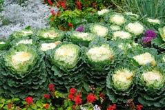 Cama con las coliflores y las flores Fotos de archivo libres de regalías