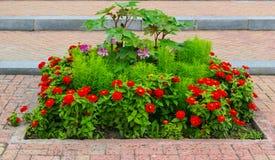 Cama con las flores rojas Imagen de archivo libre de regalías