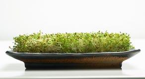 Cama da alfalfa Foto de Stock Royalty Free