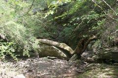 Cama de cala seca con los árboles caidos fotografía de archivo