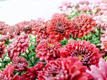 Cama de flor imagen de archivo