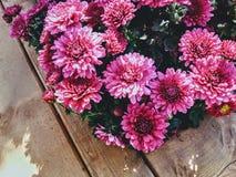 Cama de flor fotografía de archivo libre de regalías