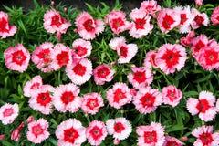 Cama de flor Fotografia de Stock Royalty Free