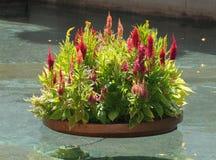 Cama de flor Imagem de Stock
