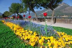 Cama de flor Fotos de Stock Royalty Free