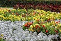 Cama de flor Imágenes de archivo libres de regalías
