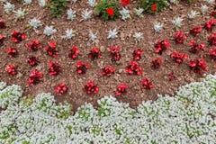 Cama de flor anual Foto de archivo libre de regalías