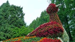 Cama de flor bajo la forma de figuras pavo real Foto de archivo libre de regalías