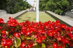 Cama de flor bonita de uma forma redonda no parque da cidade fotos de stock royalty free