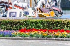 Cama de flor colorida en el fondo un puerto fotos de archivo libres de regalías