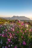 Cama de flor com a natureza bonita Fotografia de Stock