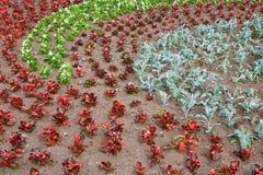 Cama de flor con las flores Imagen de archivo libre de regalías
