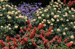 Cama de flor con las flores rojas, amarillas, rosadas, blancas Foto de archivo libre de regalías