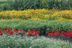 Cama de flor con las publicaciones anuales en verano imagenes de archivo