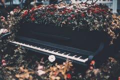 Cama de flor con las rosas dentro del piano de concierto magnífico viejo Imágenes de archivo libres de regalías