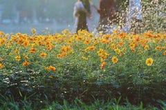 Cama de flor da água das flores das gotas Fotografia de Stock