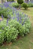 Cama de flor da mola no parque da flor foto de stock royalty free