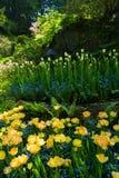 Cama de flor de florescência Imagem de Stock Royalty Free
