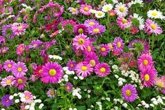 Cama de flor de las flores del otoño Imagen de archivo