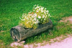 Cama de flor de madera Foto de archivo