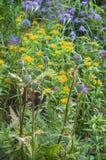 Cama de flor de perennials undemanding Foto de Stock
