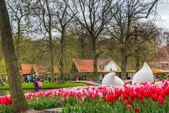Cama de flor de tulipanes rayados rojos y rosados en el parque en Keukenhof Fotos de archivo libres de regalías