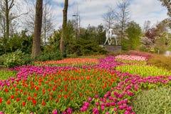 Cama de flor de tulipanes rojos y rosados en el parque en Keukenhof Fotografía de archivo