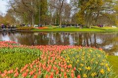 Cama de flor de tulipanes rojos y rosados y de narcisos amarillos en el parque en Keukenhof Fotos de archivo