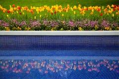 Cama de flor de tulipanes y de la reflexión en agua Imágenes de archivo libres de regalías