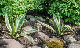 Cama de flor decorativa em um jardim com rochas e plantas Fotografia de Stock Royalty Free