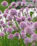 Cama de flor del verano Foto de archivo libre de regalías