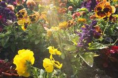 Cama de flor em jardins de Butchart, Victoria, Columbia Britânica, no por do sol foto de stock royalty free
