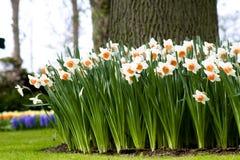 Cama de flor en el jardín Foto de archivo libre de regalías