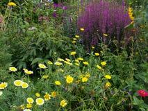 Cama de flor en el jardín del país Fotografía de archivo libre de regalías