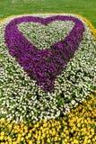 Cama de flor en forma del corazón Fotografía de archivo