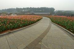 Cama de flor en jardín botánico imagen de archivo