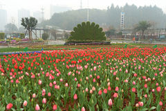 Cama de flor en jardín botánico imágenes de archivo libres de regalías