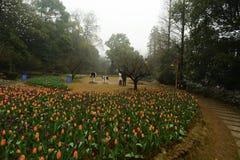 Cama de flor en jardín botánico fotografía de archivo