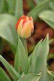 Cama de flor en jardín botánico imagen de archivo libre de regalías