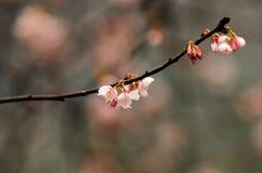 Cama de flor en jardín botánico fotografía de archivo libre de regalías