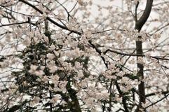 Cama de flor en jardín botánico fotos de archivo