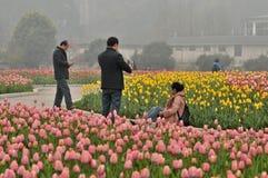 Cama de flor en jardín botánico fotos de archivo libres de regalías